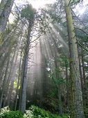 Bosque de Sunbeam