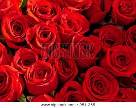 Red-Roses1