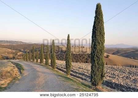 Cypress trees on Tuscan road at sunset