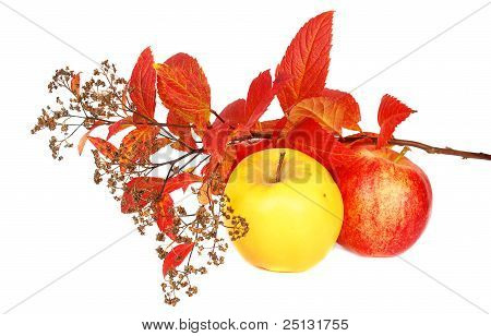 Autumn Leaves And Apples.