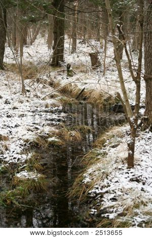 Snow In The Forrest