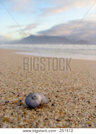 Shell On A Cape Town Beach