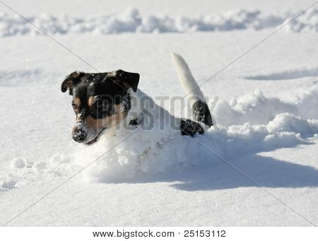 Cute Dog Jumping In Snow