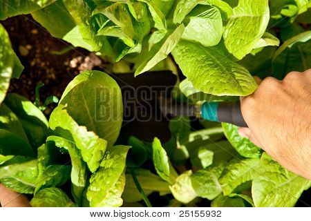 Gardener with trowel