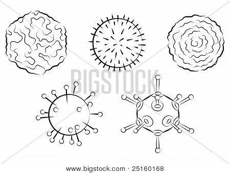 Influenza Viruses. Black And White