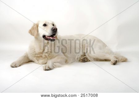 Lovely Dog