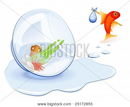 Goldfish moving from his spilled fishbowl