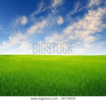 summer field landscape