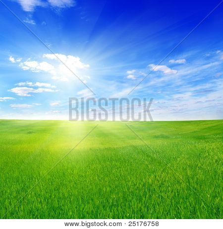 green field and sun sky