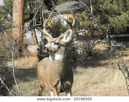 Colorado Wildlife