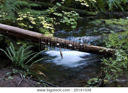 Fallen Logs in Creek