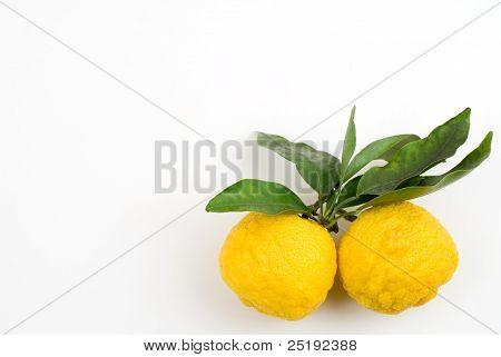Yellow small citrus