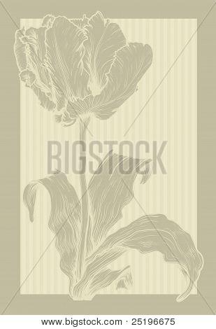 Jahrgang Tulpe.