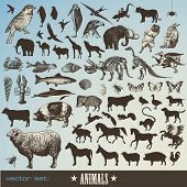 pic of animal silhouette  - vector set - JPG