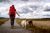 Young Woman Walks With Two Dogs On A Hiking Trail In The Mountains Hiking With A Dramatic Sky - Labr poster