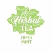 Herbal Tea With Fresh Mint Logo Template. Isolated Hand Drawn Green Silhouette Label With Peppermint poster