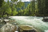 Mountain River Kucherla, Forest, Altai, Russia. Fast Water Stream In Mountain River With Coniferous  poster