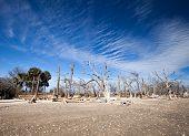 Botany Bay Beach, Edisto Island, South Carolina, Usa poster