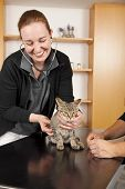 domestic cat being examined poster