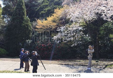 Taking Picutres Of The Blossom In Tokyo