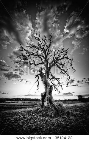 Alone dead tree on country highway in black and white.