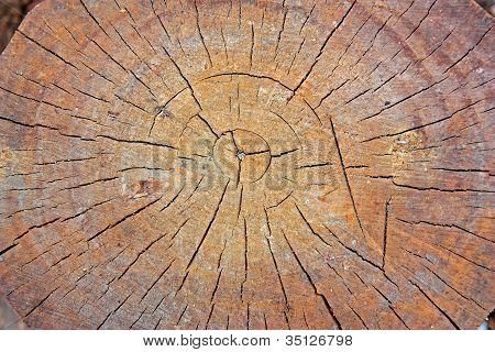 Tree Rings Full Frame
