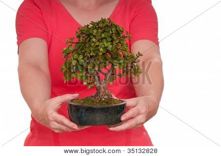 Two Hands Are Holding A Bonsai Tree