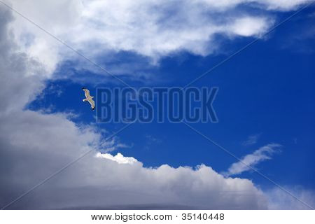 Seagull Hover In Blue Sky With Clouds
