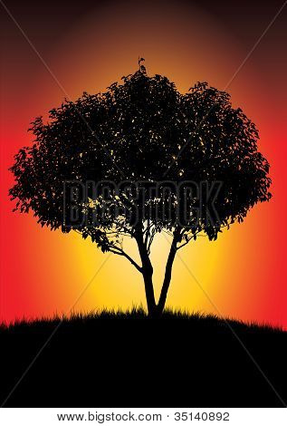 Single Black Tree In Sunset