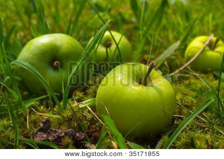 Four Green Apples In Grass
