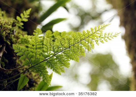 Beautiful Lush Tropical Fern Plant On A Tree With Bright Green Symmetrical Leaves. This Closeup Macr