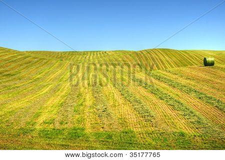 sanfte Hügel des geschwadeten Feldes