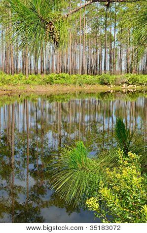 Lagoa na unidade de Ilha do pântano