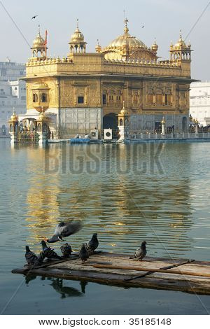 Pigeons At Golden Temple, Amritsar