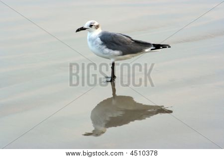 Seagul On The Beach