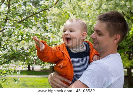 Dad and son walking in the park and view the flowers on the trees.