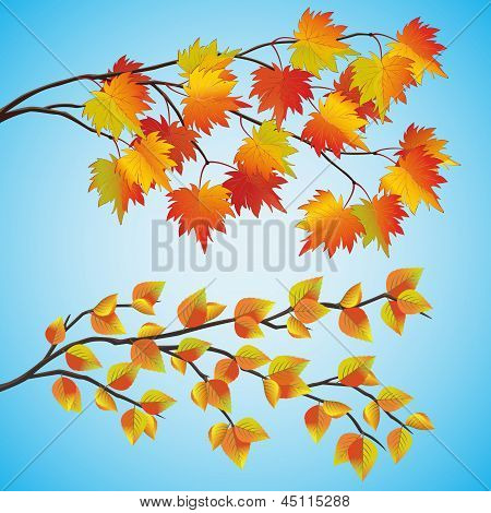 Set Of Autumn Tree
