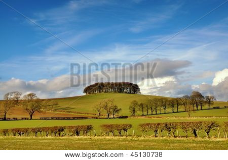 Copse of trees in English Countryside