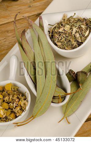 Camomile, Echinacea, Eucalyptus