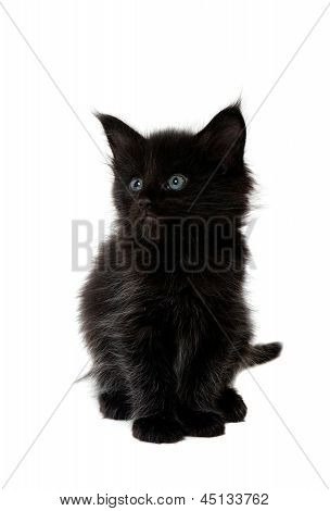 Small Black Kitten