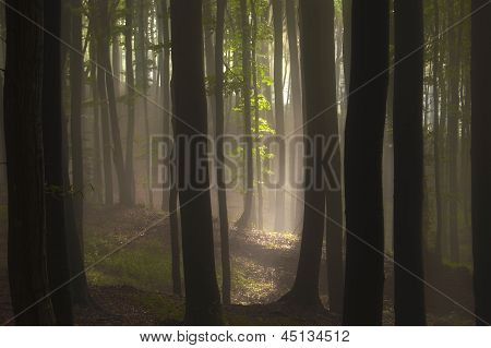 Light shining in a forest in summer