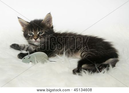 Little Kitten Lying On A Fur Rug With A Toy Mouse