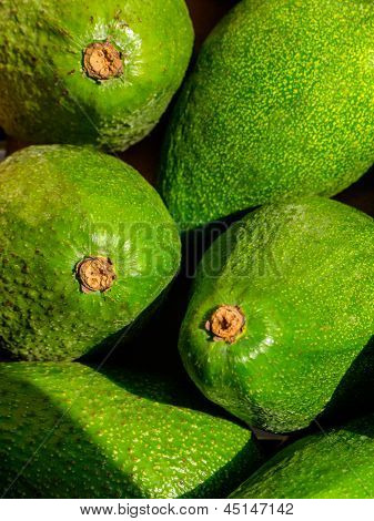 Green Avacado Background