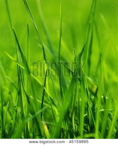 Close up of fresh thick grass.