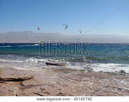Kites in Eilat, Red Sea, Israel