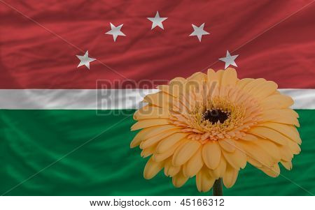 Gerbera Flower In Front  National Flag Of  Of Maghreb