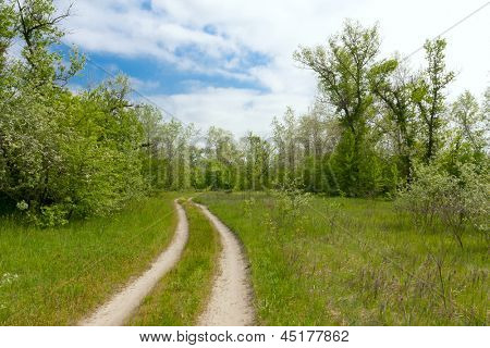 landscape with road in forest