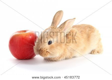 Fluffy foxy rabbit with apple isolated on white