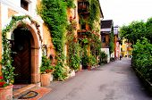 picture of ivy vine  - Flower lined street in the traditional Austrian village of Hallstatt - JPG