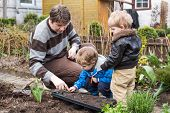 Two Little Boys And Father Planting In Garden